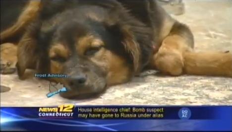 dog-prosthesis